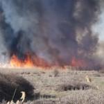 Ολοκληρωτική καταστροφή σε κτηνοτροφική μονάδα στο Περδικάκι