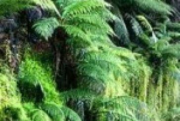 Πολλαπλασιαστικό υλικό των φυτών: όλα ξεκινούν από εδώ!