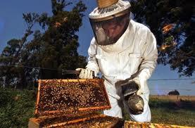 Tαχύρυθμο πρόγραμμα κατάρτισης μελισσοκόμων