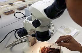 Συνεχίζονται οι έλεγχοι για την ελονοσία