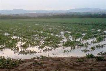 Ζημιές σε καλλιέργειες στο Ρίβιο και στο Καινούργιο