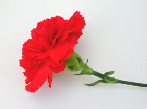 Πένθος για την οικογένεια της Έλενας Μάντζιου-Κοτρολού