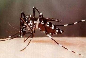 """Στο μικροσκόπιο το """"κουνούπι-τίγρης"""""""