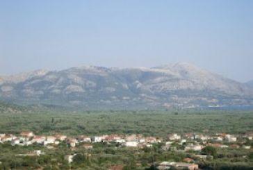 Οι ελιές του κάμπου της Αλυζίας στόχος των λαθροϋλοτόμων.