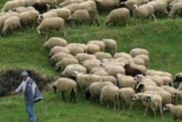 Πρόσκληση σε όσους εκτρέφουν αιγοπρόβατα