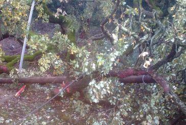 Πτώση δένδρου πάνω σε γήπεδο