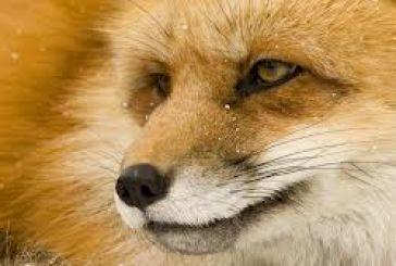 Ενημέρωση για την αντιμετώπιση της λύσσας στους ποιμενικούς σκύλους