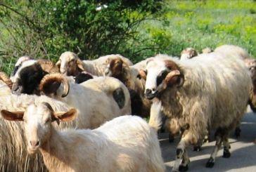Υπενθύμιση σε κτηνοτρόφους