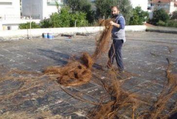 Στηv ταράτσα του Νηπιαγωγείου Αστακού φύτρωσε συκιά με τις μεγαλύτερες ρίζες στο κόσμο!
