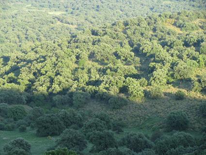 Δασικοί χάρτες: Πώς μπορούν να… σωθούν τα χωράφια με εκπτώσεις έως 83%