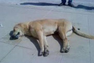 Αστυνομική έρευνα για τη θανάτωση ζώων