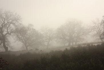 ΦΩΤΟ: Ομίχλη στο Βελανιδοδάσος Ξηρομέρου
