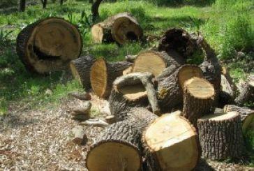 Ψηφίστηκε το νομοσχέδιο του ΥΠΕΚΑ – Στα 300 ευρώ το πλημμέλημα λαθροϋλοτομίας