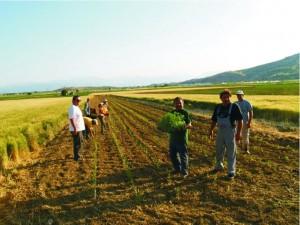 Eνημέρωση για τα Σχέδια Βελτίωσης νέων αγροτών