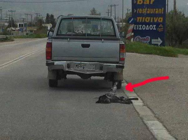 Aγρίνιο:Έσερνε με το αγροτικό τον σκύλο στην άσφαλτο