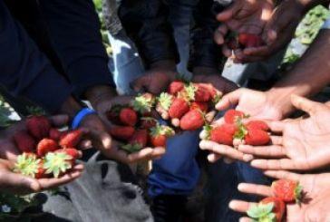 ΟΑΣ: Απέναντι στην αιματηρή πολιτική να απαντήσουμε με την μαζικοποίηση των Αγροτικών Συλλόγων.