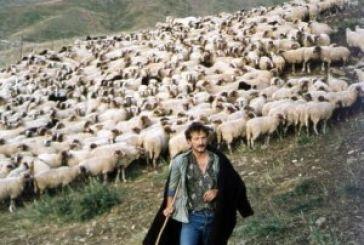 Απόγνωση για τους κτηνοτρόφους του νομού!