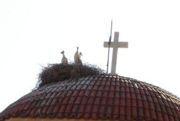 Οι πελαργοί δεσπόζουν και πάλι στο Ναό του Αγίου Αθανασίου Κατούνας