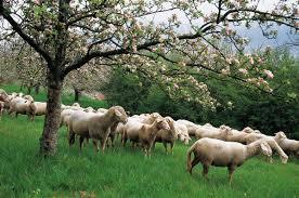 Δικαιούχοι και απορριπτόμενοι για τα προγράμματα Βιολογικής Κτηνοτροφίας Αιτωλοακαρνανίας