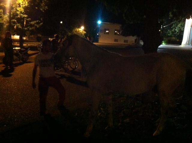 Άλογο έκοβε βόλτες στο κέντρο του Αγρινίου