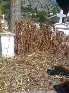 Σε κακό χάλι το νεκροταφείο στα Βλυζιανά