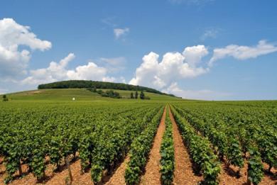 Ερώτηση Δημ. Κωνσταντόπουλου για το χρόνο καταβολής των αγροτικών ενισχύσεων