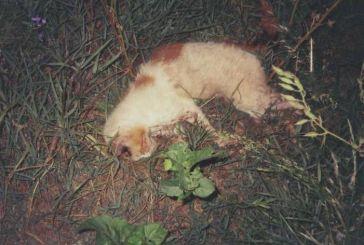 Δικογραφία για φόλες σε δύο γάτες στα Δύο Ρέματα Αγρινίου