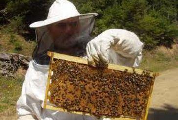 Διήμερο πρόγραμμα κατάρτισης μελισσοκόμων στο Μεσολόγγι