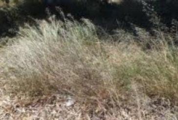 Κίνδυνος από ξερά χόρτα στο δρόμο Σχοίνου-Σκουτεράς