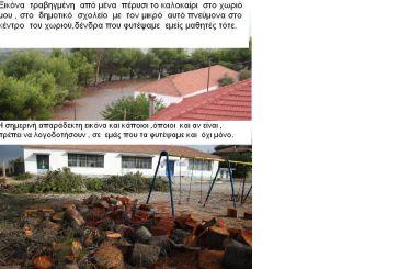 Δεν άφησαν δέντρο στο  Δημοτικού Σχολείου  Αμπελακίου