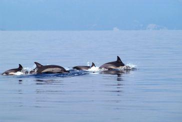 Πάνω από 100 θεάσεις δελφινιών  μέσα σ' ένα χρόνο σε Ιόνιο και Αμβρακικό!