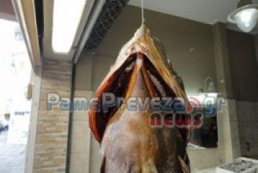 Πρέβεζα: Ροφός πάνω από 20 κιλά αλιεύτηκε με ψαροντούφεκο