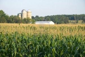 Παρέμβαση της ΈΑΣ Αγρινίου για την απορρόφηση της παραγωγής καλαμποκιού