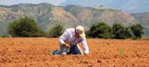 Ποιες είναι οι δύο καλλιέργειες που επιδοτούνται «χρυσά» στην Ελλάδα και αποφέρουν κέρδη έως και 2.000 ευρώ το στρέμμα