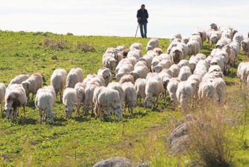 Δεν τέλειωσαν τα βάσανα των κτηνοτρόφων με τον φόρο στα μαντριά…