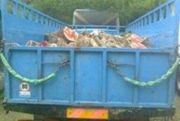 Μπλόκο στο Ρίβιο στη μεταφορά παράνομης ξυλείας