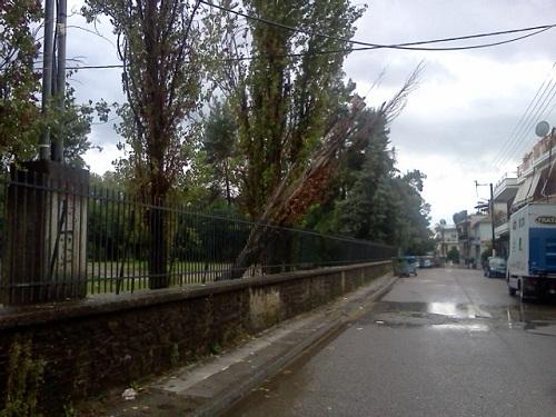 Κι άλλη πτώση δέντρου στο πάρκο (φωτο)