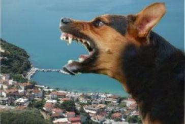 Φόβος και τρόμος στο Μενίδι από την επίθεση αδέσποτου σκύλου σε κατοίκους