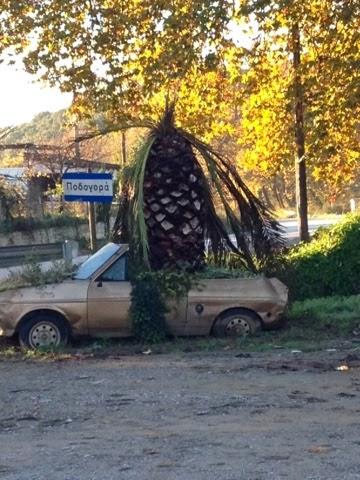 Φοίνικας φυτεμένος σε παλιό αυτοκίνητο σε χωριό του Ίναχου!