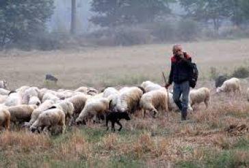 Σύσκεψη ΟΑΣ στον Αστακό για τα προβλήματα της κτηνοτροφίας