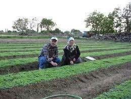 Έρευνα της ΕΛΣΤΑΤ για τις γεωργικές και κτηνοτροφικές εκμεταλλεύσεις