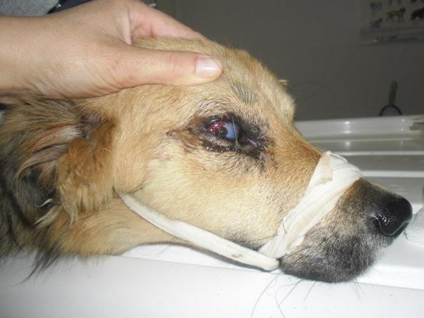 Πυροβόλησαν σκυλίτσα  στο κεφάλι