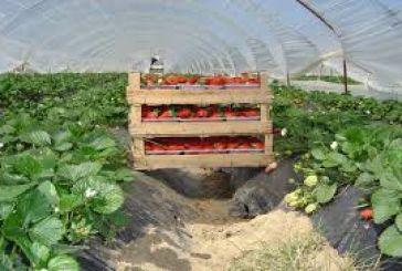 Πρόγραμμα ενίσχυσης επενδύσεων στη μεταποίηση και εμπορία γεωργικών προϊόντων