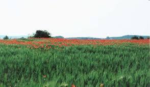 12 αγροτεμάχια στο Αγγελόκαστρο για τετραετή μίσθωση