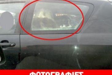 Απίστευτο: Έβαλε γίδα στο… πίσω κάθισμα!