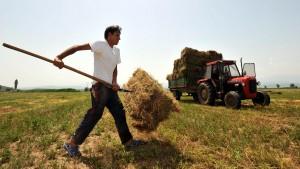 Macedonia Wheat Harvest