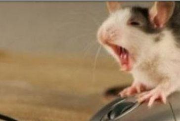 Ποντίκι, spam, hacker:Πως πήραν το όνομα τους: