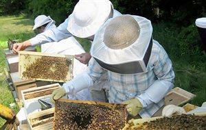 Κονδύλι 300.000 ευρώ στον ΕΛΓΟ Δήμητρα για σεμινάρια μελισσοκομίας