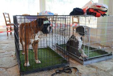 Ξεκίνησε το σεμινάριο παρουσίασης και χειρισμού σκύλου στο Μεσολόγγι (φωτο)