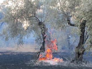 Αιτωλοακαρνανία: επιχείρησε να κάψει κλαδιά και …έκαψε λιοστάσι